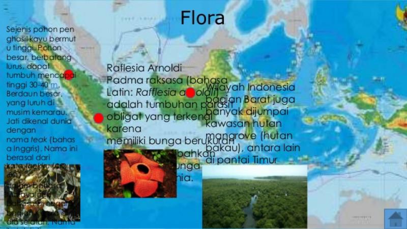 Rangkuman Materi Persebaran Flora Di Indonesia